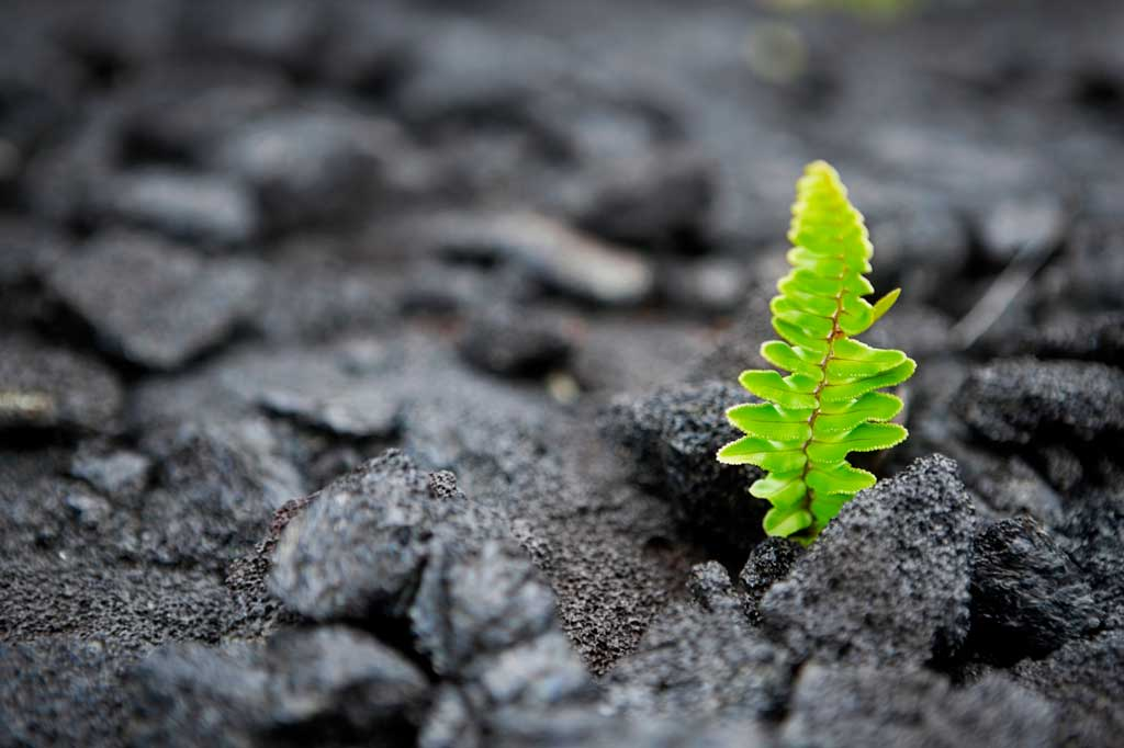 Finding grit and resiliency