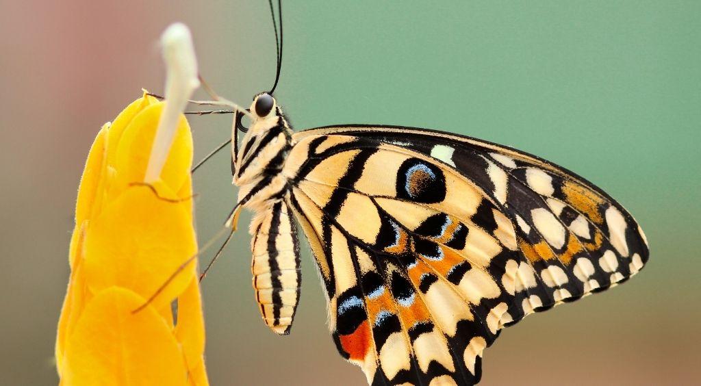 Menopause transformation